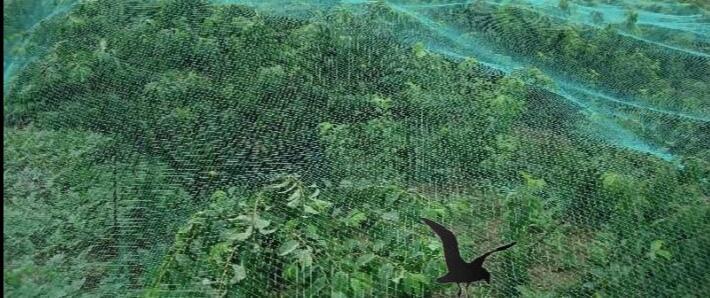 农业用网3