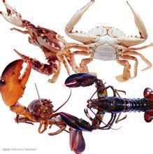 """""""饥饿投喂法""""可节省南美白对虾养殖成本"""