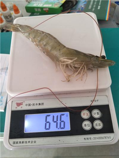 海达鑫大虾